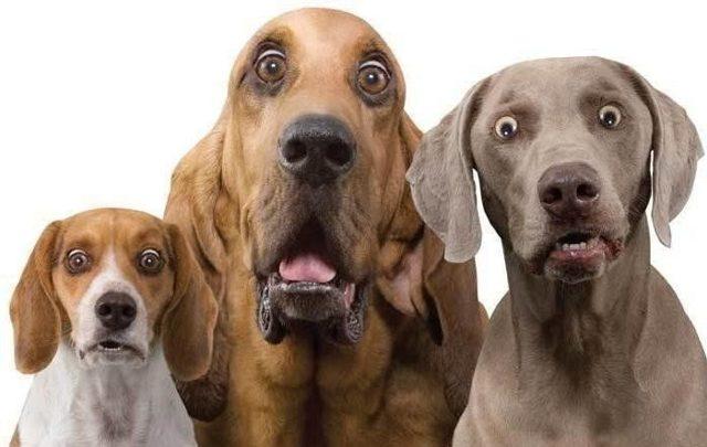 В Правительстве обсуждают введение налога на собак